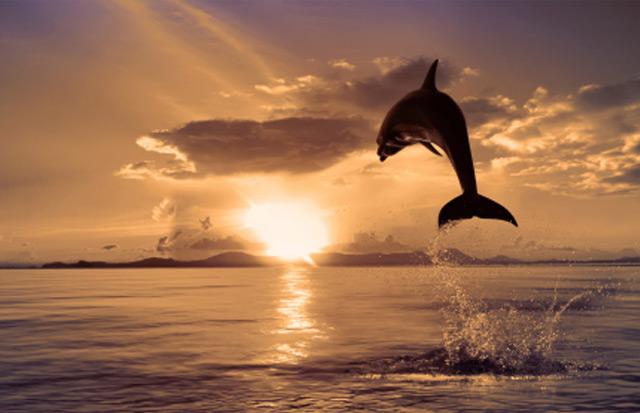 Calea Delfinului